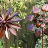 SMALL FLOWER WINDSPINNER SET OF 4 SP610