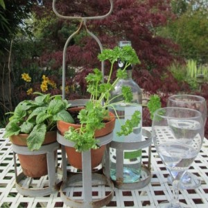 Garden Bottle Carrier
